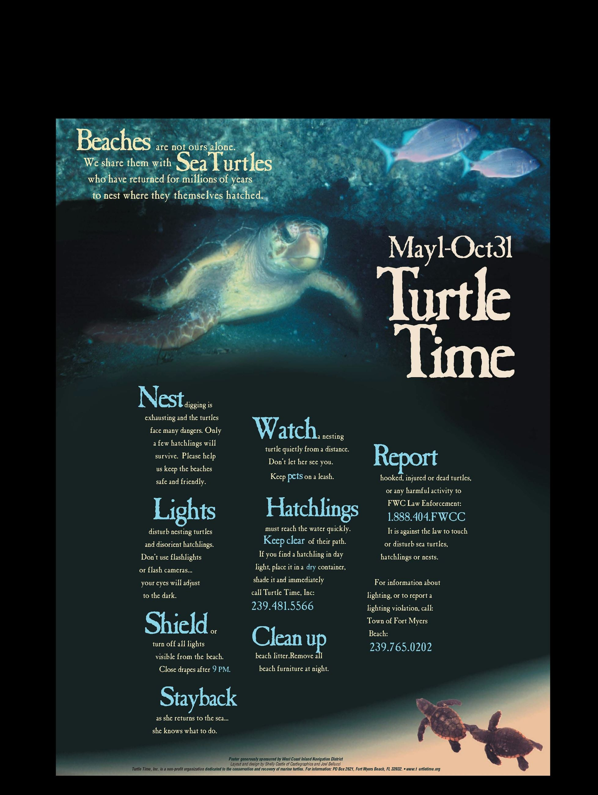 Turtle Time Poster _2017